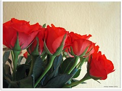 Rosenstrau - bunch of roses (Jorbasa) Tags: rot rose germany deutschland hessen blossoms blumen blten wetterau bunchofroses jorbasa rosenstraus