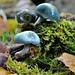 Bosques de Asturias fotos