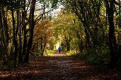 The Autumn Path (juliereynoldsphotography) Tags: autumn trees shadowandlight juliereynolds stadtmoers