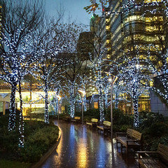 Lighted Trees at Canary Wharf