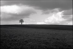Shadow line. The turn of the season, Brittany. (RoryO'Bryen) Tags: copyrightroryobryen france brittany bretagne walk tree clouds dark leicam6 ilfordfp4 roryobryen rangefinder scannedfromnegative scanofnegative m6 28mm 35mm messsucher leicaelmaritm28mmf28asph