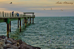 Seagulls Bridge (Aisha Altamimy) Tags: wood sea bw seagulls wonder wooden seaside sidewalk thinking kuwait q8 souqsharq bridg