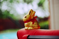 I got a chocolate bunny for Easter. (mere.groom) Tags: summer bunny film pool canon easter photography death gold for golden photo spring photographer photos ae1 bokeh chocolate foil f14 cab cutie zooey deschanel