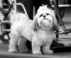 Perro Bonito Nice doggie (Raul Jaso) Tags: blackandwhite bw dog byn blancoynegro dogs mexico mexicocity df perro perros coyoacan tender tenderness ciudaddemexico mexicodf ternura