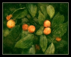 Oranges (edenseekr) Tags: trees orange fruit florida oranges textured digitallypainted