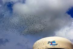 Bossier City Birds (ELKMTN) Tags: louisiana watertower bossiercity birdflock