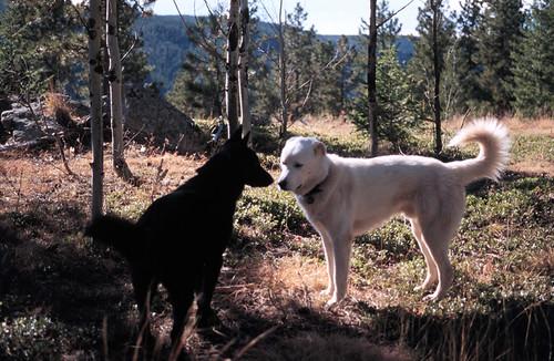 Photo - Dogs on OSMP