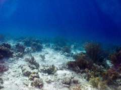 Where Are The Fish? (dlyoung) Tags: fall wildlife scuba bonaire thelake flowersplants shoredive divetype