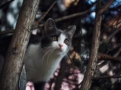 Street cat 161 (Yalitas) Tags: cat cats    kedi chat feline kat katze katzen kot kotka pet felino kottur katte kass kitty gato kocka gatta katzchen canon streetcat