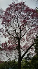 20160811_113118_HDR (filipealves1) Tags: sopaulo trees nature natureza parque ibirapuera brazil brasil