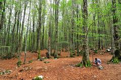 En el hayedo del parque natuaral del Abruzzo (Italia) (Lucas Gutirrez) Tags: hayedo hongos abruzzo parquenatural italia molise granadanatural lucasgutierrezjimenez hbitat bosque montaa