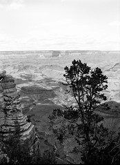 Tree (ShaneJMrozek) Tags: grand canyon national park painted desert petrified forest neopan acros d76 gs645s bw film mediumformat 120