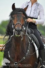 Petra Korhöfer (Vicktrr) Tags: majestic horses bremen germany galopprennbahn race course bremer pferdetage horse friesian andalusian andalucian pre stallion spanish equine equestrian barrel racing cowboy indians paint lunging vaulting pinto