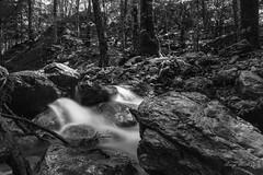 Tannera (lurick.01) Tags: acqua bosco rio rocce