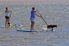 Dog Paddling (por2able) Tags: t189 longboarding dogs paddling dogpaddling topsham exeestuary devon tistheseason dockbay sailsevenseas