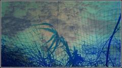Crete  Sidewalk 4 (TudioJepegii) Tags: window epzcamp rethymno rethymnon rhthymnos rthymnon rethimno travel tudio tudiojepegii town trees urban culture outdoor irakliorethymno oldtown connectivity wonderingflowers plant atmosphere albertostudio aristocratic announcement streetphotography street streets structure stone sea destination detail default definciency democratic dust flower greece griekenland greek green hospitality highway jepegii kreta kriti kritis local leave layers landscape light zu crete center cretans cameraphonenokialumia630ismycanvas vacation vegitation vincentvangogh blue background beach nature new mediterranean municipal mu