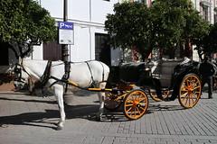 Sevilla (18) (crgmry) Tags: sevilla seville wintersun city espana spain historic historiccity