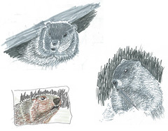 Critter Scan Collage (mrtim persinger) Tags: sketch groundhog woodchuck pittsburgh