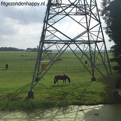 IMG_3679flickr (Sonja Diane) Tags: hardlopen oterleek ursem heerhugowaard weiland weilanden paarden