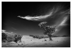 Tree and Cloud (memories-in-motion) Tags: lorbeer lorbeerbaun alt old tree laurel madeira north blck white mono cloud landscape landschaft impression photography travel hiking light shadow contrast nature natur air canon distagon zeiss 21mm 445 160sec portugal feather feder