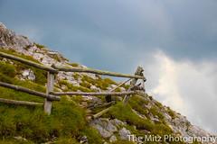 IMG_3347 (The Mitz Photography) Tags: gams grünersee hochschwab mariazell maryclan murmerl mädels nebel pilgern sommer steinbock wandern