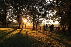 Weerterbos, edelherten spotten (ToJoLa) Tags: canon canoneos60d 2016 weerterbos nederweert edelherten natuur natuurgebied sunrise zonsopgang landscape landschap sun zon bos wood uitkijkpunt shadow silhouet