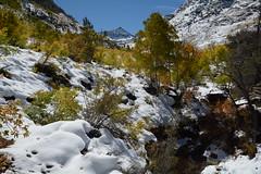 Thomas Canyon (jlrminer) Tags: nevada nikon rubies rubymountains