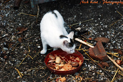 (Nick Kout) Tags: life autumn nature beauty animals cat nice nikon zoom greece crete nikkor heraklion 2012 70300 d80