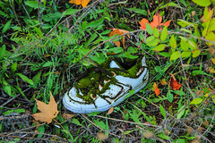 Mossy shoe (flickaway1) Tags: autumn trees color fall field clouds canon lost shoe moss windy falling trail covered t3i