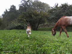 Here I come, Mom!! (Xena*best friend*) Tags: wood autumn wild italy pet cats pets animals fur fun appaloosa chats furry woods feline flickr action stones tiger kitty kittens whiskers piemonte gato calico purr paws gatto katzen pussycat markings feral actionshot monicabellucci monicab wildanimals gigia ©allrightsreserved alleycatallies atfullspeed piedmontitaly oglia canonef70300mm canoneos500d eosrebelt1i hayplantation alfalfaplantation