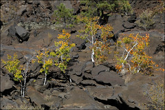 Aspens and Lava (Kenneth David Geiger (aka Ken Foto)) Tags: volcano lava sunsetcraternationalmonument