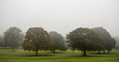 Autumnal Trees in Mist  - Camperdown Park - Dundee Scotland (Magdalen Green Photography) Tags: trees misty scotland cool moody dundee tayside camperdownpark iaingordon autumnaltreesinmist magdalengreenphotography2932