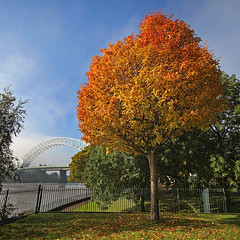 Autumn and the Bridge..... (Chrisconphoto) Tags: uk autumn colour tree fall composition fire vivid getty gettyimages runcorn merseyside widnes runcornbridge