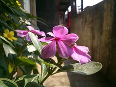 Macro shot from Sony Xperia P mobile