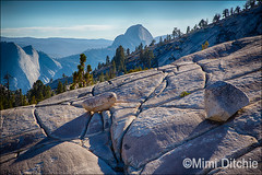 Half Dome From Olmstead Point (Mimi Ditchie) Tags: 120 rocks afternoon yosemite granite halfdome yosemitenationalpark olmsteadpoint tiogaroad