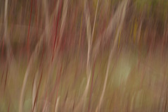 1/3 (Girardartist) Tags: abstraction abstrait artphotography photographieartistique