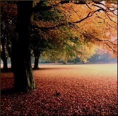 Höst (Marie Granelli) Tags: autumn tree skåne october sweden explore trelleborg söderslätt nikons8000