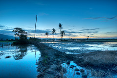 Bendang series (Tuah Roslan) Tags: blue color tree dawn flickr paddy coconut yan padi kedah fiels bendang tuah roslan darat merbok singkir ainst