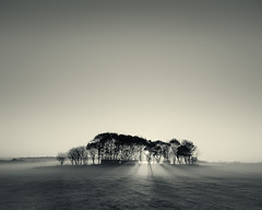 Misty Trees (Alistair Bennett) Tags: trees sunset sun mist mono evening shadows rays lightbeams nikkorafs1635mmƒ4gedvr