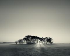 Misty Trees (Alistair Bennett) Tags: trees sunset sun mist mono evening shadows rays lightbeams nikkorafs1635mm4gedvr