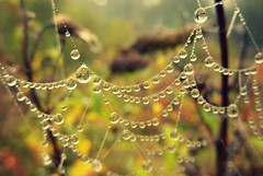 Autumn dewdrops (niknok2007...) Tags: autumn reflection green nature leaves reflections drops october web yorkshire reflect dew hatfield moors doncaster southyorkshire hatfieldmoors niknok2007