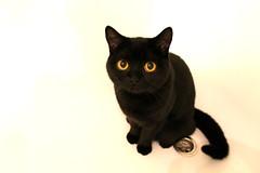 298/366 - 24/10/12 (oana-emilia) Tags: black cute cat blackcat bath kitten place luna tub bathtub favourite odc 365project shuttersisters afavouriteplace shuttersister ourdailychallenge 3652012 shuttersister365 365the2012edition