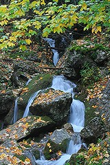 autumn creek (Eifeelgood) Tags: france autumn fall herbst eifeelgood favorites magicplaces magic places magicmoments indiansummer elements