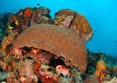 "Brain coral refuge (gillybooze (David)) Tags: sea fish coral reef bonaire thegalaxy ©allrightsreserved ""flickraward"" madaleundewaterimages"