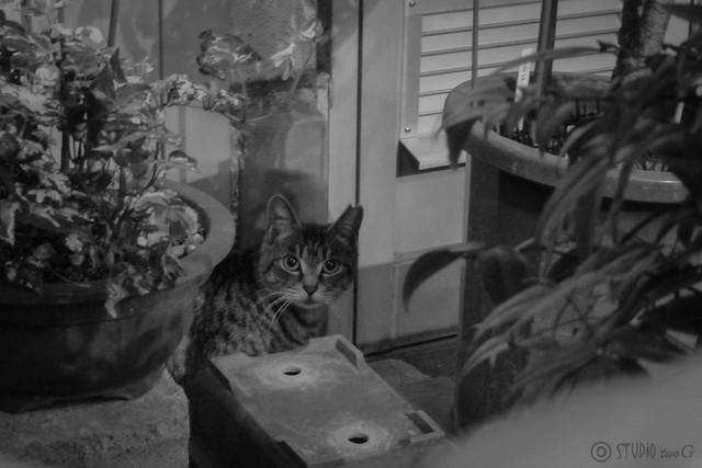 Today's Cat@2012-10-26