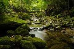 A Stream in an Old Temple  (Masashi bon) Tags: longexposure temple stream    allxpressus 02