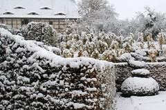 Park and vineyard as neighbours (:Linda:) Tags: snow castle barn germany vineyard village thuringia halftimbered gaupe dormer fachwerk gaube dornburg dornburgerschlösser dachgaupe dachgaube