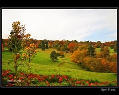 A Picture Of Autumn. (Picture post.) Tags: morning autumn trees color green nature leaves clouds landscape interesting bluesky hills paysage arbre ragwort mygearandme mygearandmepremium mygearandmebronze mygearandmesilver