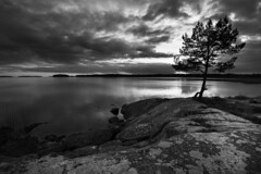 Silver sunset (- David Olsson -) Tags: sunset blackandwhite bw lake tree nature water monochrome silhouette clouds silver landscape mono nikon october rocks sundown cloudy sweden stones tripod calm cliffs karlstad silvery grayscale fx vnern lonelytree 2012 vrmland 1635 d600 1635mm lakescape lateautumn skutberget lonesometree scenicsnotjustlandscapes davidolsson 1635vr