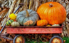 All Agourd (TicKavich) Tags: halloween pumpkin wagon gourd cornstalks